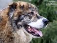 'Lollipop - piękny, towarzyski pies