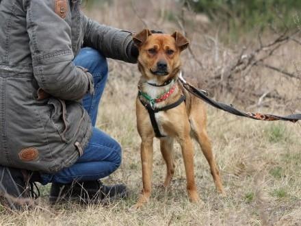Rico-młodziutki przyjacielski nieduży psiak szuka domu