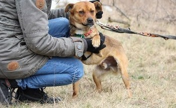 Rico-młodziutki,przyjacielski,nieduży psiak szuka domu