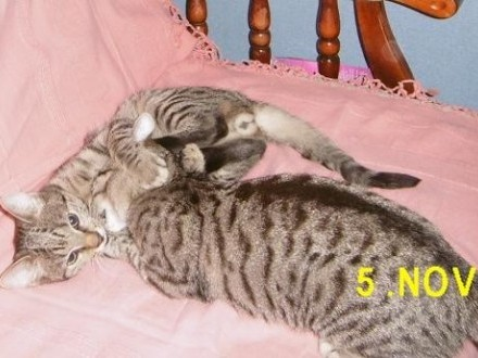 Słodki koci dwupak - Czaruś i Szara