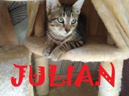 Kociaki: Julek i Simba szukają domów   łódzkie Łódź