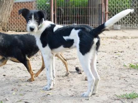 Fado, młodziutki terierek, fantastyczna psina do adopcji!