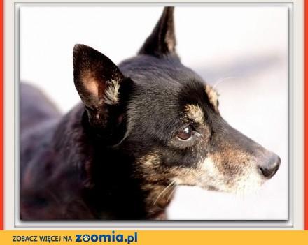 Mały 8 kg  starszy  przesympatyczny łagodny grzeczny psiak RYSIO_Adopcja