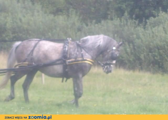 konie i kuce BYC MOŻE MAMY KONIA DLA CIEBIE!