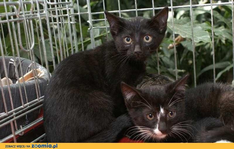 Kociak Czaruś nieśmiały śliczny kocurek czeka na kochający dom!