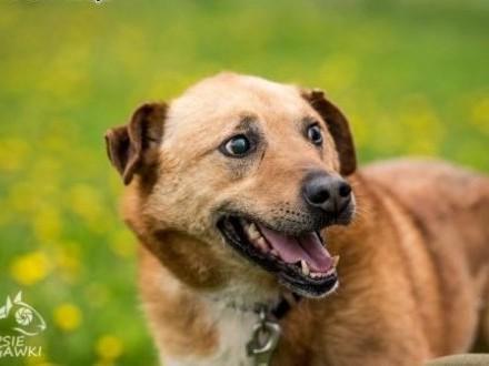 MARIO - pies odlotowy  na adopcję gotowy :D   mazowieckie Warszawa
