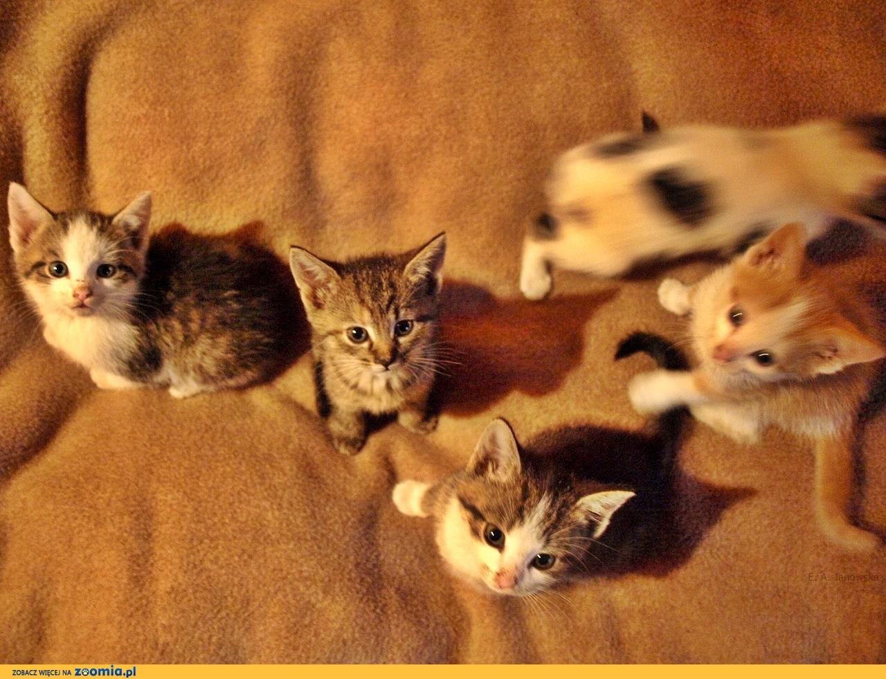 Kocięta szukają wspaniałych domów!
