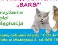 Salon pielegnacji Psa i Kota,,BARBI,  wielkopolskie Konin