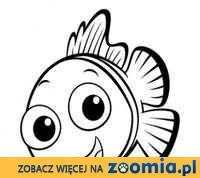 Serwis i zakładanie akwarium