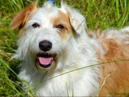 Tola - piękna sunia  psi aniołek :)   warmińsko-mazurskie Olsztyn
