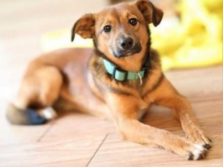 ROMEK - niewielki  roczny  uroczy psiak do adopcji   mazowieckie Warszawa