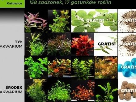 Zestaw roślin do dużego akwarium  158 sadzonek  17 gatunków +GRATIS