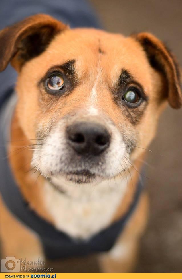 Casanova, przyjazny psi senior zasługuje na wspaniały dom!