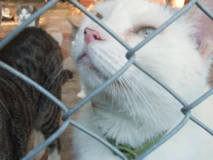 Biały  domowy kot czeka w schronisku na nowy dom!   warmińsko-mazurskie Olsztyn