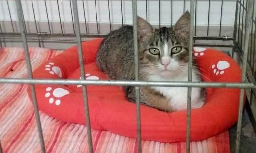 Mila  sympatyczna koteczka szuka domu!   Koty pospolite cała Polska