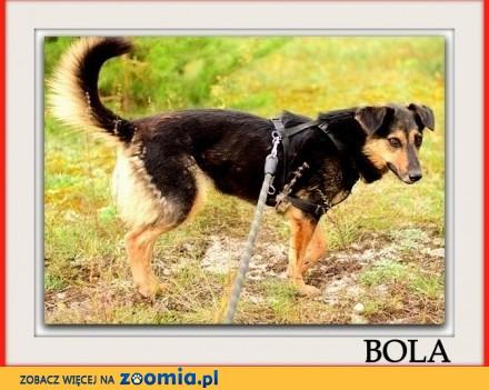 Przyjazna średnia kontaktowa sterylizowana suczka BOLA_Adopcja_