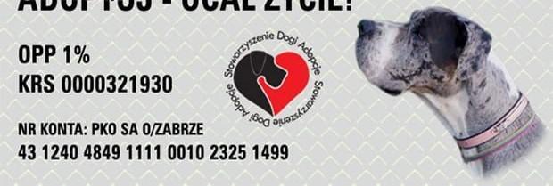 Lucek żółty dog niemiecki  młodzieniec szuka domu   śląskie Cieszyn