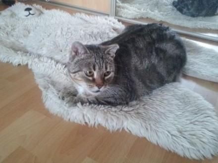 Starsza koteczka prosi o ciepły kącik   Koty pospolite cała Polska
