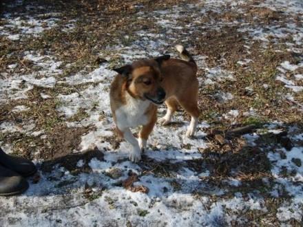 Kapsel  młodziutki i niewielki psi przyjaciel szuka domu!