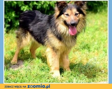 Do agility idealny  15kg  2 lata długowłosy pies PEDRO_Adopcja