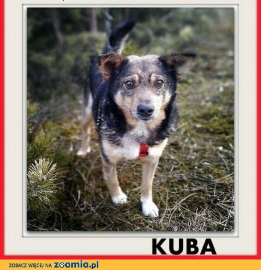 Łagodny,towarzyski pies KUBA szuka domu.Szczepiony,adopcja.,  mazowieckie Warszawa