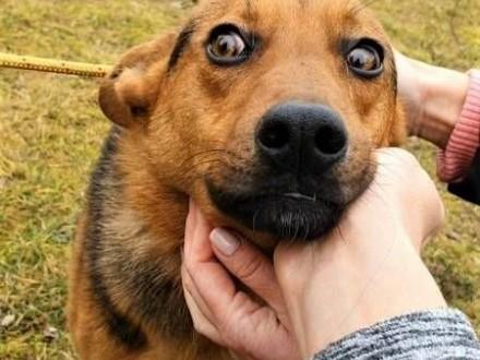 OLAF - roczne  przerażone psie dziecko błaga o dom!   mazowieckie Warszawa