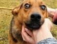 OLAF - roczne, przerażone psie dziecko błaga o dom!,  mazowieckie Warszawa