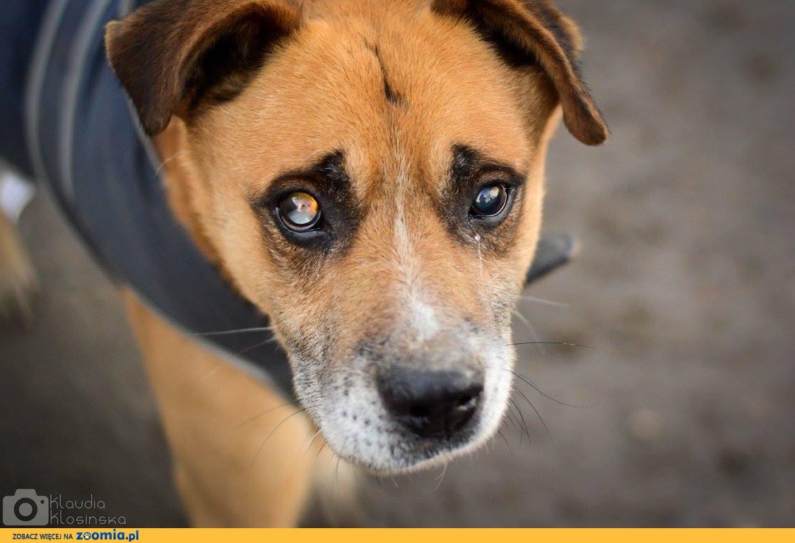Casanova, niewymagający, przyjazny psiak szuka domu!