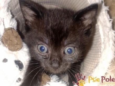 MAŁY Smutny kotek Radosek-szukamy kochającego domu  adopcja