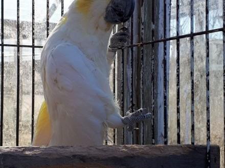 Kakadu Trinitron