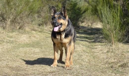 Agia - wspaniała psia seniorka szuka bezpiecznej przystani    pomorskie Wejherowo