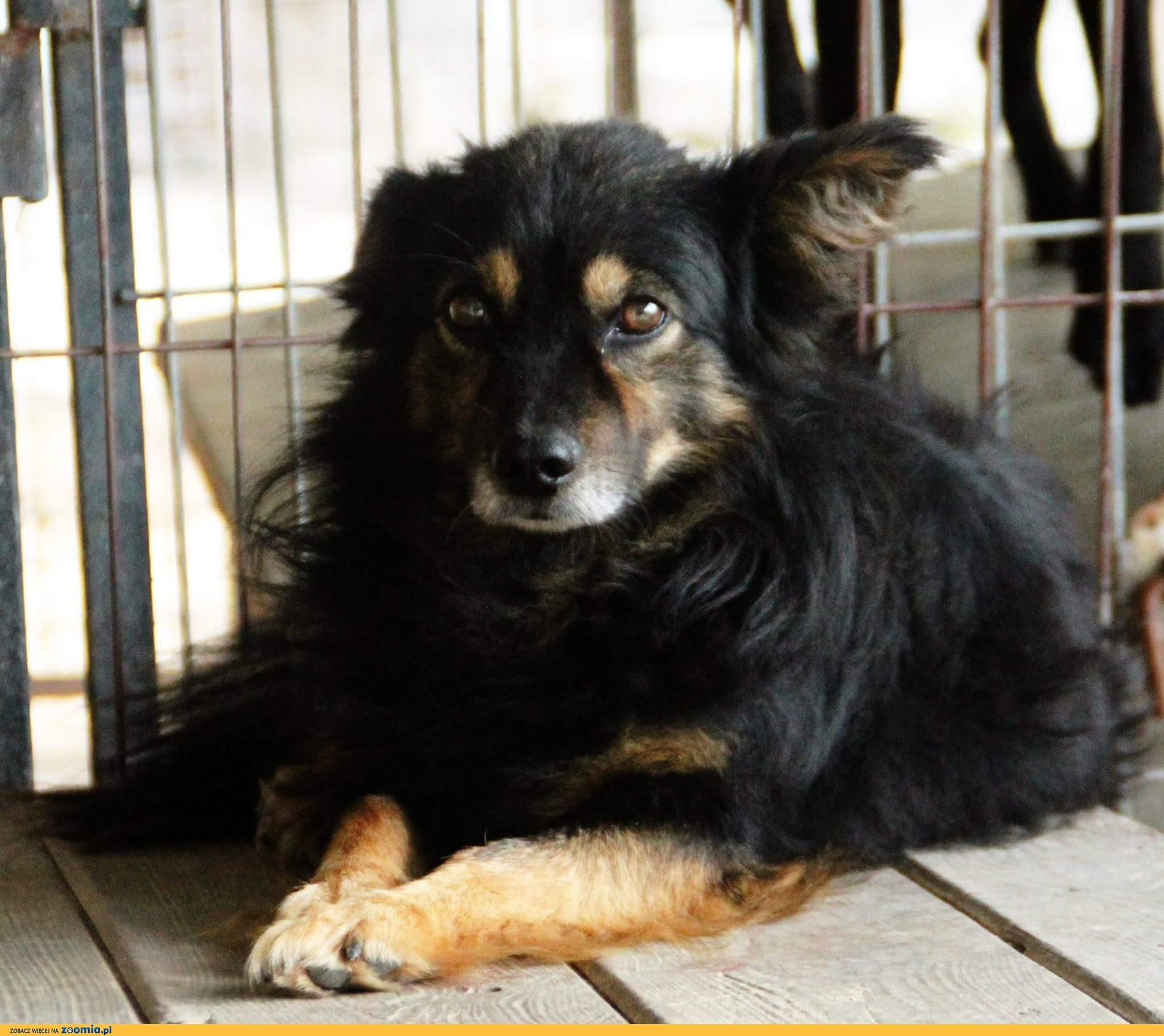 Lucek, wspaniały psi indywidualista szuka domu!