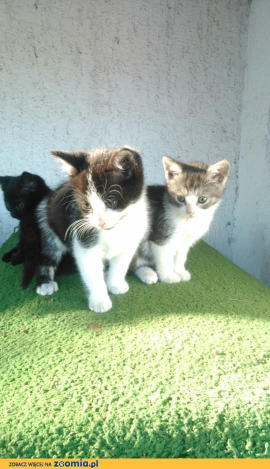 5 uroczych kociaków szuka nowych domów