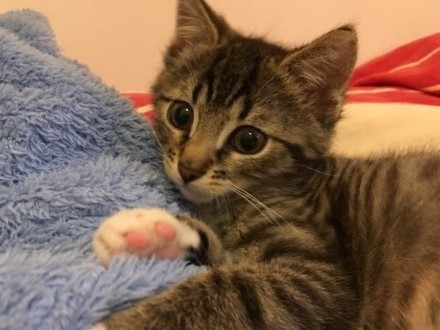Mały urwis szuka domu/ kot niewychodzący