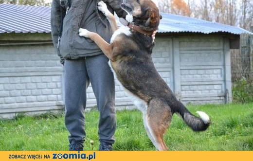 Maks - jego opiekunowie trafili do domu opieki - 5/6 letni psiak do ADOPCJI,  śląskie Katowice