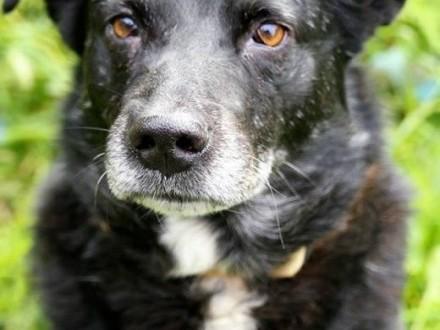 Zwyczajnie nadzwyczajny Cygan  najkochańszy pies świata!   Kundelki cała Polska