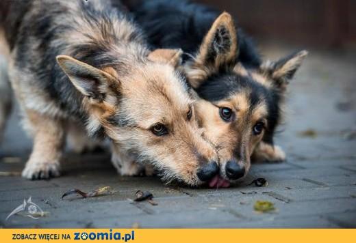 Gucio i Chałka - te młode pieski czekają na swojego człowieka!,  mazowieckie Warszawa