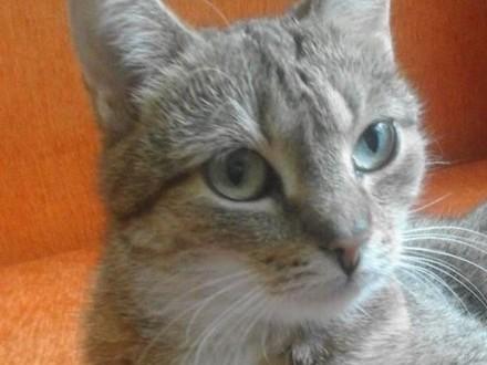 Zaginęła kotka- ulica Rojna