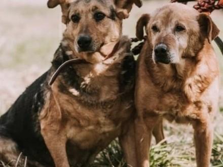 JULKA i LUIS - cudowne  sponiewierane życiem psiaki błagają o wspólny dom!