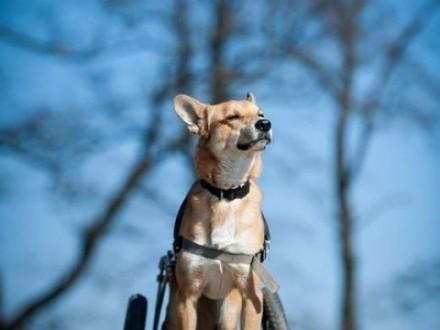 TOFFIK - kto pokocha psa  co tyle optymizmu ma ? :)   dolnośląskie Wrocław