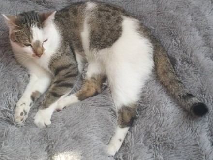 Zaginął kot - ulica Okulska