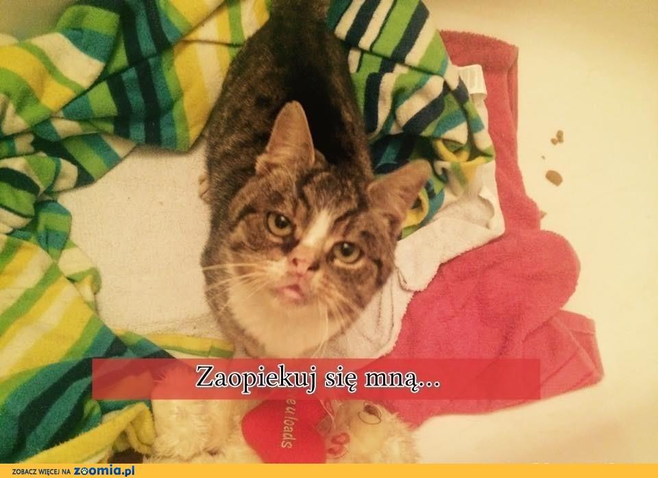 Kot w potrzebie, szuka domku i kochającego człowieka