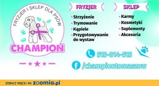 CHAMPION - fryzjer i sklep dla psów,  łódzkie Tomaszów Mazowiecki
