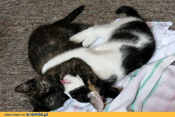 Młode kotki szukają domów