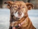 OTOZ Animals - Zosia - wyjątkowa i cudowna suczka szuka domku!,  pomorskie Tczew