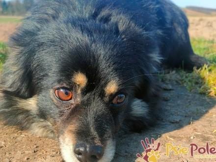 JUPPI-super fajny  miły  odrobinkę nieśmiały psiak szuka kochającego domu  adopc