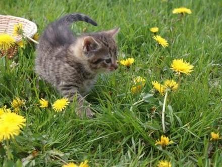 6 tygodniowe koteczki do adopcji!