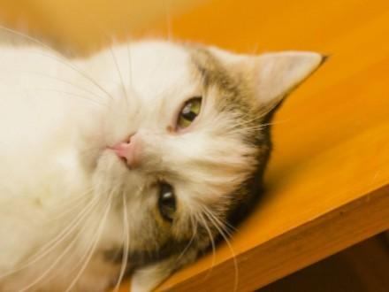 Gabi - kotka z charakterkiem szuka domu
