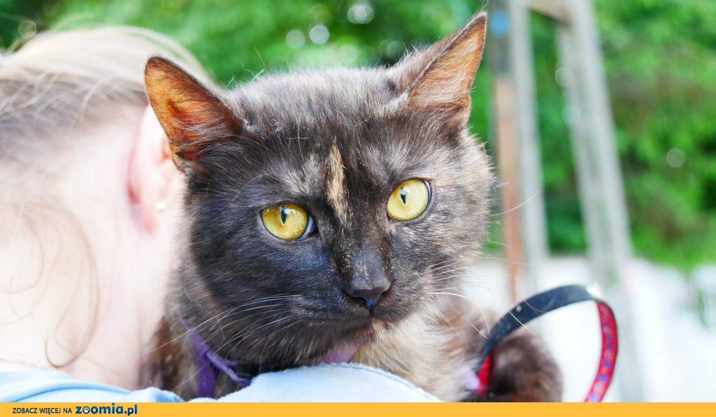 Tosia, 8 miesięczna zdrowa kotka szuka domu!