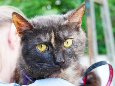 Tosia  8 miesięczna zdrowa kotka szuka domu!